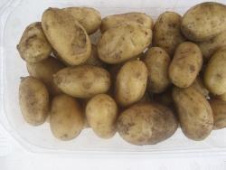 Charlotte kartofler