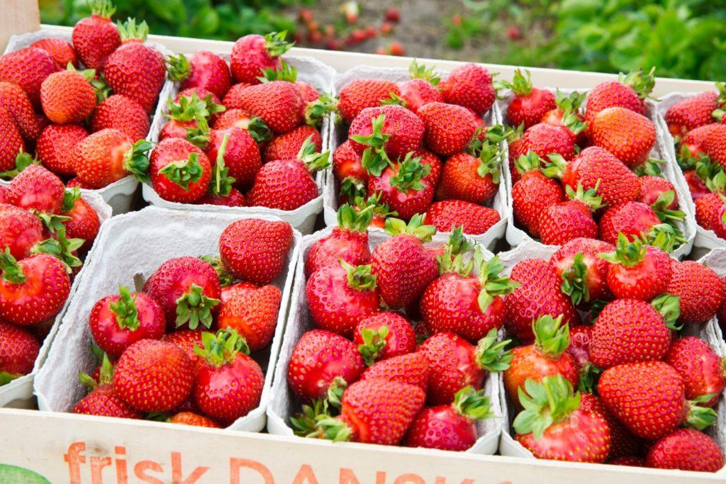 Danske jordbær i bakker